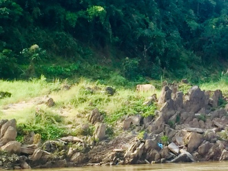 Hard to see among the rocks, but we spotted an elephant on the banks of the river!